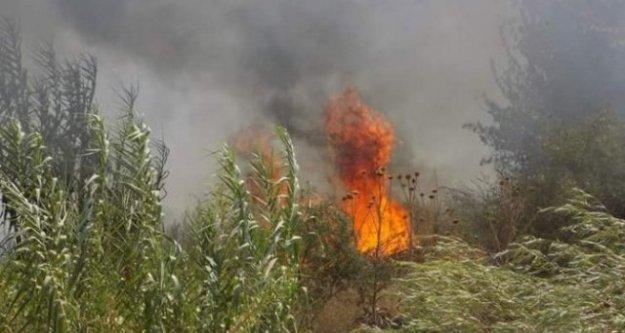 Karpuzlu'da zeytinlik alan yangında zarar gördü