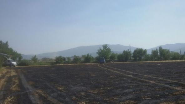 Çine'de, Arpa Tarlasında Yangın