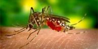 ZİKA Virüsü Dünyaya Korku Salıyor