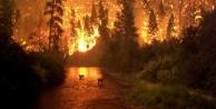 """Yangınlar, dağlarımızı kel, ovalarımızı çöl yapar."""""""