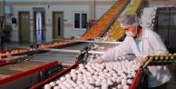 Yumurta ihracatı Başbakan Binali Yıldırımın barış mesajıyla şaha kalktı