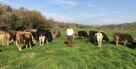 İkinci Dönem Besilik Erkek Sığır Destekleme ödemeleri başladı