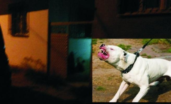 Köpek Yüzünden Tartıştılar; 1 Yaralı