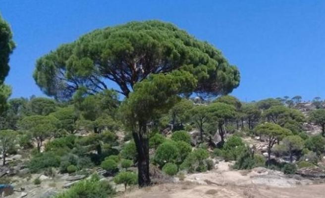 Ağaçtan Düşen Yaşar Acar, Hayatını Kaybetti