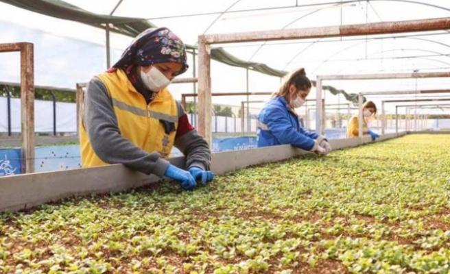Büyükşehir, Çine'de kendi ürettiği çiçeklerle Aydın'ı renklendiriyor