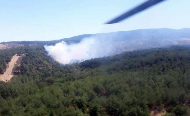Aydın'da aynı anda iki orman yangını çıktı
