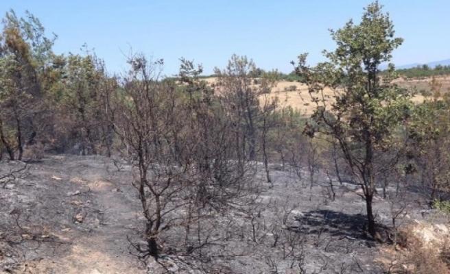 Bozdoğan'daki yangın kontrol altına alındı