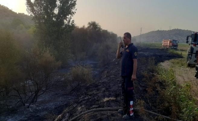 Çine'de ateş savaşçılarının hızlı müdahalesi zeytin ağaçlarını korudu