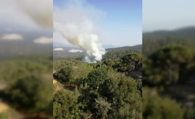 Karpuzlu'da yangın başladı