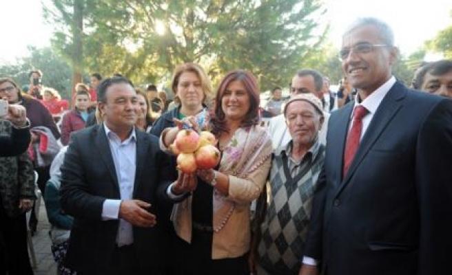 Aydın'da Tarlada Kalan 60 Ton Nar Halka Dağıtılacak