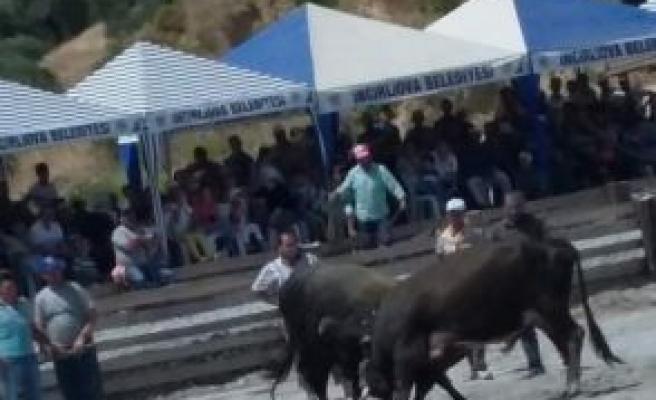 Boğalar Arenaya Öğrencilere Burs İçin Çıktı