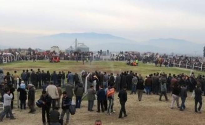 Deve Güreşi Festivali'ne yoğun ilgi gösterildi