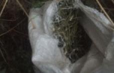 Jandarma, Küp İçerisinde Uyuşturucu Ele Geçirdi