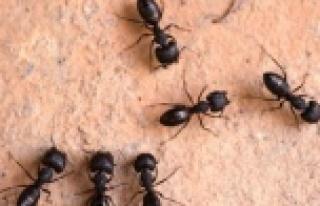 15 Yaşındaki Çocuk Karınca Tozu İlacından Zehirlendi