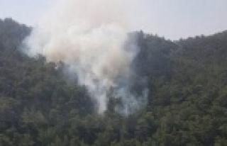 Aydın'da 10 Dönüm Arazi Yangında Zarar Gördü
