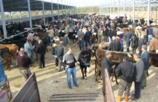 Çine, Nazilli ve Çeştepe Hayvan pazarları açıldı