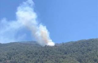 Akçaova'da orman yangını