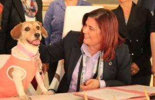 Aydın Büyükşehir Belediyesi Can Dostlara Sahip...