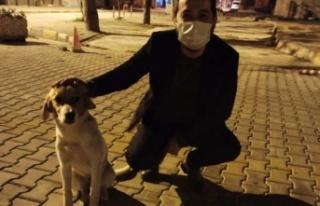AK Partili gençler sokaktaki dostlarını unutmadı