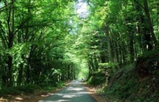Aydın genelinde ormanlık alanlara girişler yasaklandı