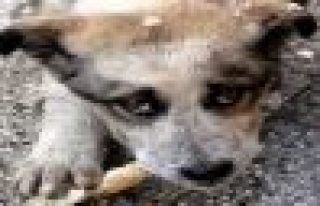 ADÜ'lü Gençler Sokak Hayvanlarına Sahip Çıkıyor