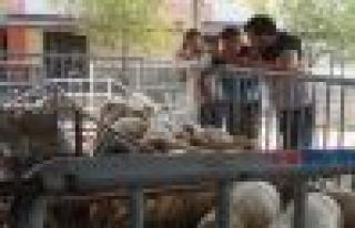 Çine Hayvan Pazarı Durgun