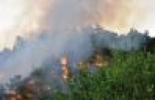 Çine'de 3 ayrı noktada yangın çıktı