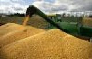 Dikkat 18 ton mısırı kurtardı