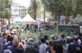 Çine'de, 11 Bin 400 Zeytin Fidanı Dağıtıldı
