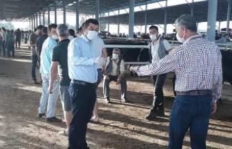 Çine Hayvan Pazarları Açıldı