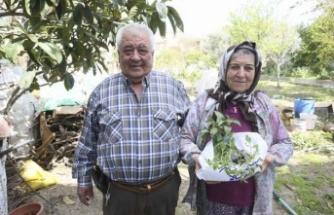 Büyükşehir Belediyesi'nin Ata Tohumlarından Yetiştirdiği Fideler Vatandaşların Bahçesiyle Buluştu