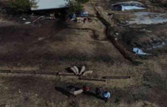 Karpuzlu'da kaybolan koyunlar drone ile bulundu
